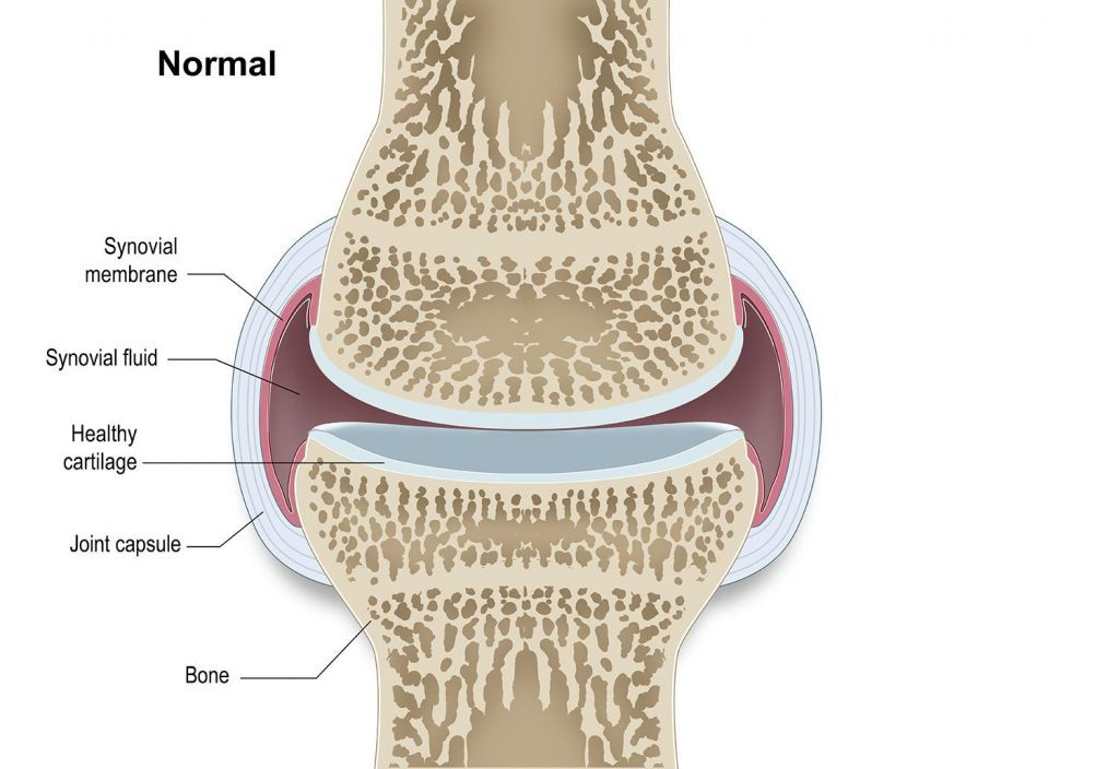 Illustration of healthy joint without arthritis