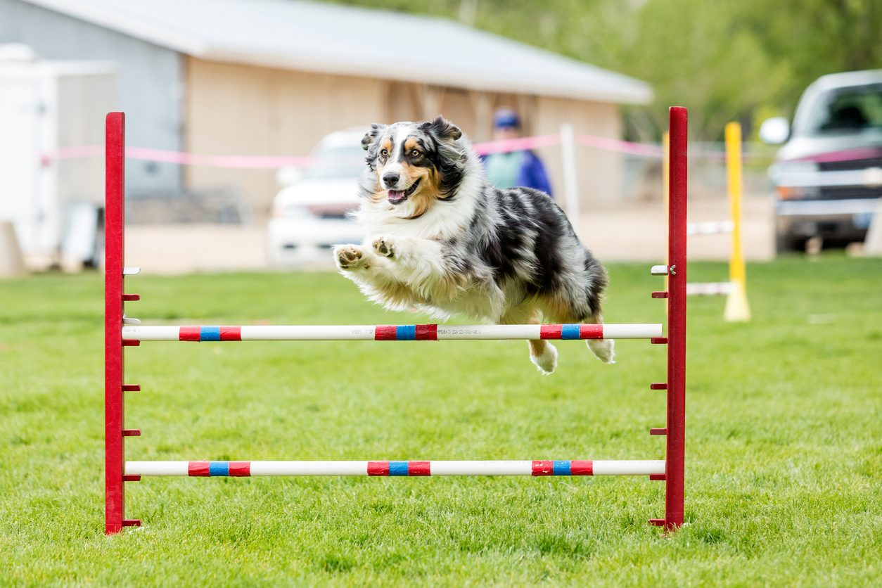 dog agility warm-ups cooldowns